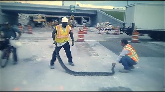11 Foot Python 11-foot Python Found at nw